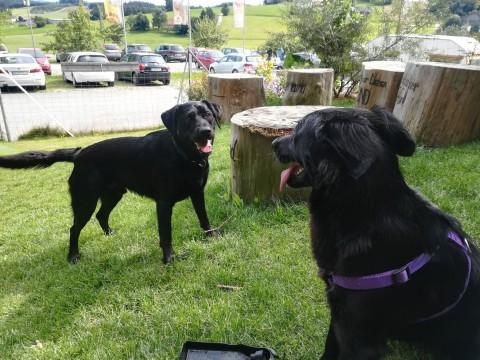 Bärenwald Arbesbach – Hunde erlaubt