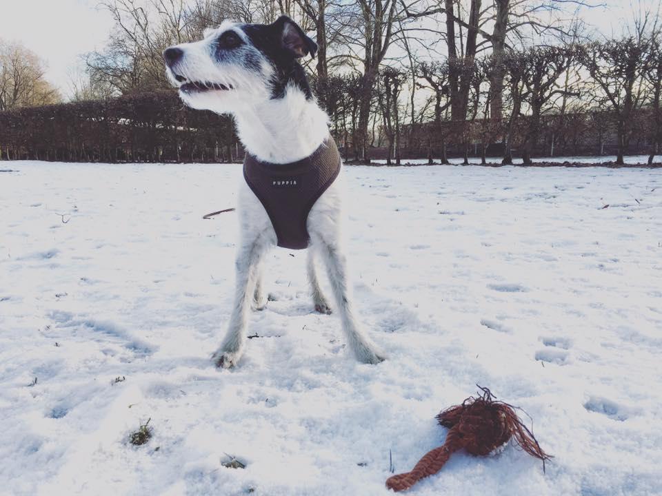 Böller und Co Generalisierung in der Hundeerziehung