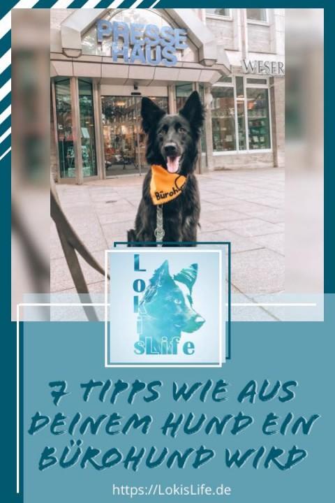7 Tipps wie aus deinem Hund ein Bürohund wird
