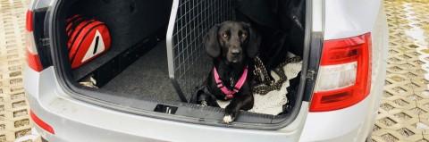 Sicheres Autofahren mit Hund
