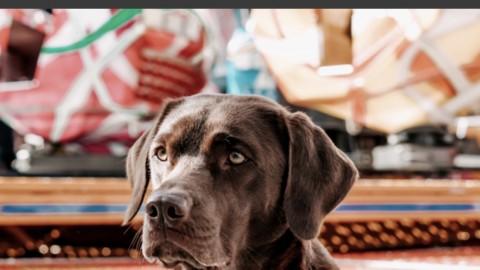 Produkttest: Hundegeschirr, Halsband und Hundeleine von Dog Copenhagen