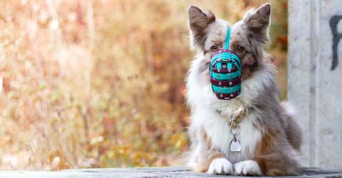 Bunter Maulkorb für einen bunten Hund [Anzeige]