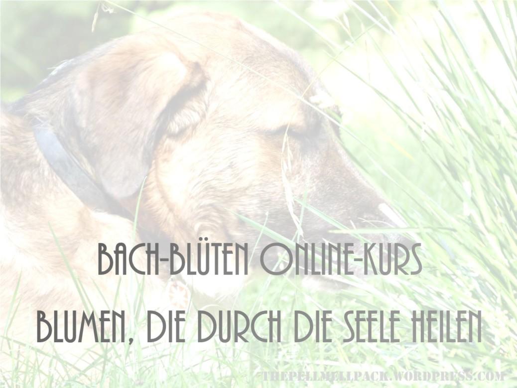 Bachblüten für Hunde Onlinekurs