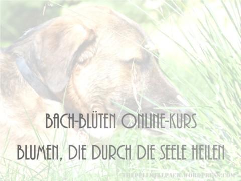 Bach-Blüten Online-Kurs bei Susanne Oertel