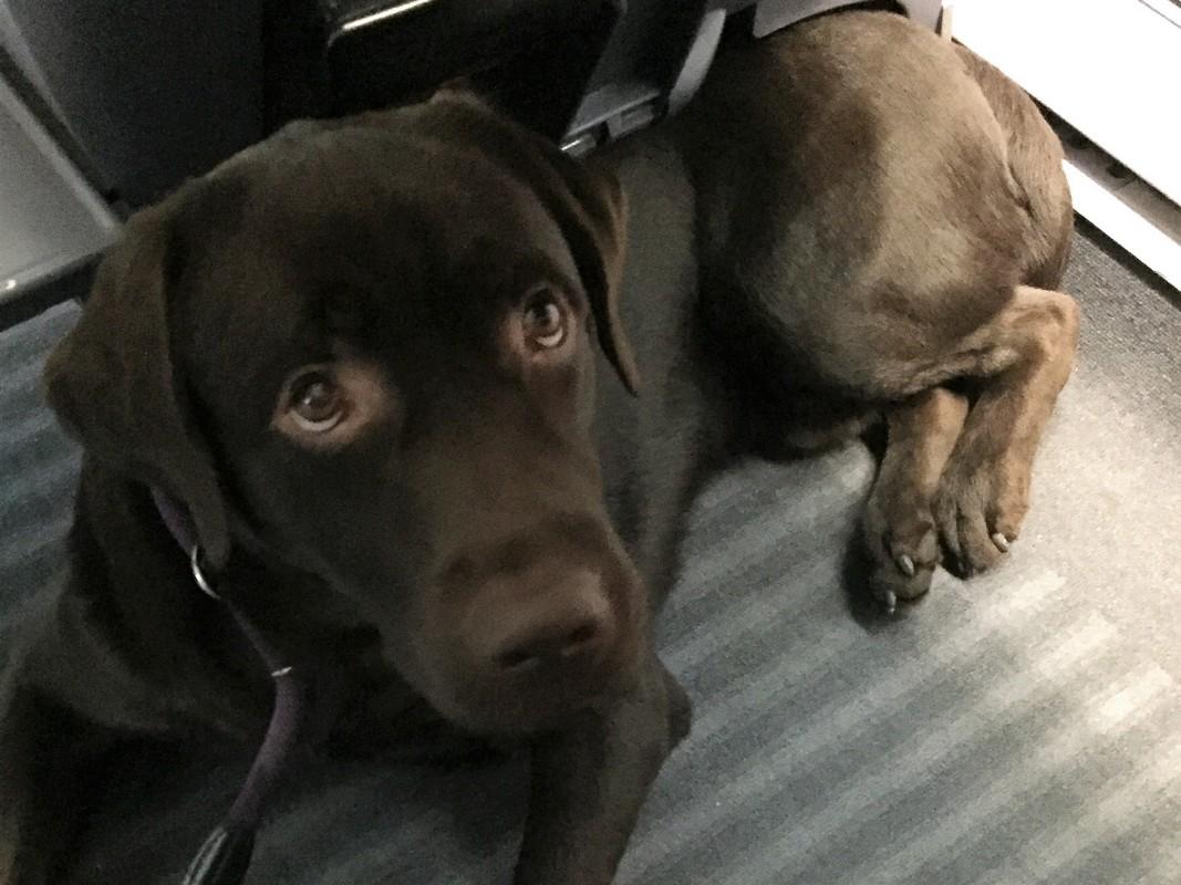Bahnfahren mit Hund