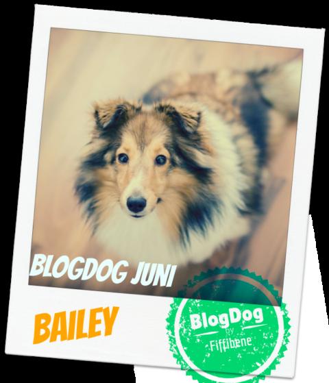 BlogDog Juni: Pfeif auf Germanys Next Topwuff!