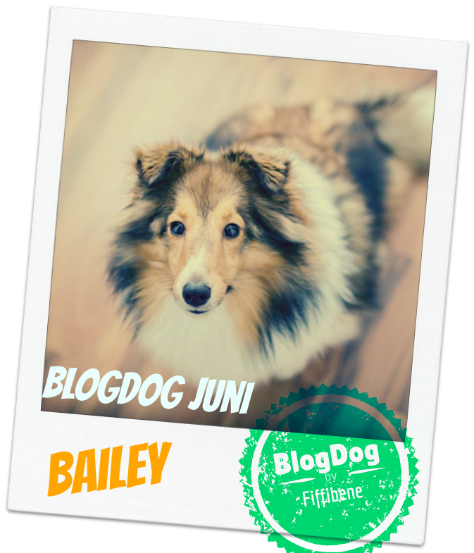 Bailey Hundeblog BlogDog Award Fiffibene
