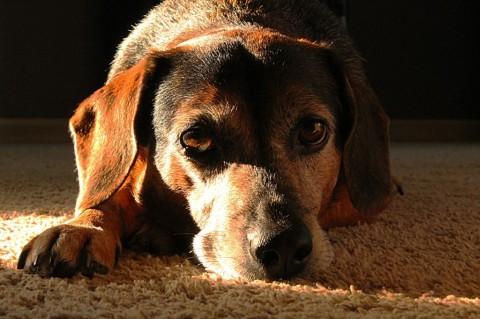 Der Bandscheibenvorfall – Symptome, Diagnose, Behandlung & Verhaltenstipps