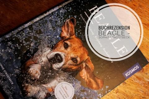 Beagle – eine Liebeserklärung