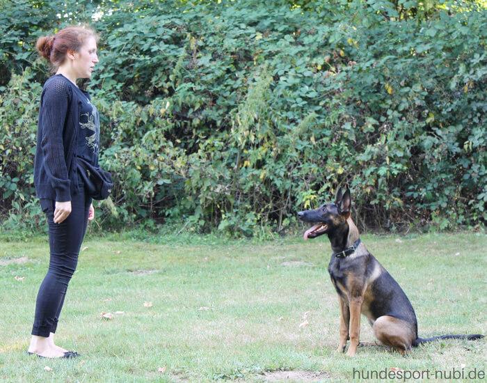 Begleithundeprüfung -Vom Welpen zum Begleithund - Malinois - Hundesport Nubi (2)