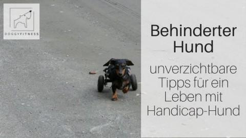 Behinderter Hund – Unverzichtbare Tipps für ein Leben mit Handicaphund