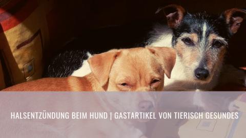 Halsentzündung beim Hund | Gastartikel von Tierisch Gesundes
