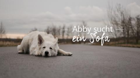 Abby sucht ein Sofa!