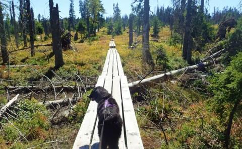 Filze und Schachten – Traumtour im Bayerischen Wald