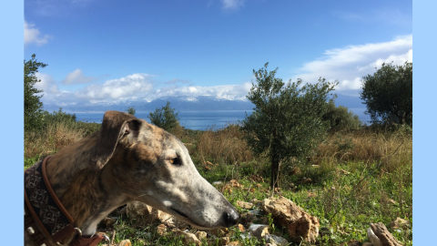 Urlaub mit Hund in Griechenland – über Aussteiger und Wanderungen
