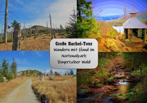 """""""Große Rachel-Tour"""" – Wandern mit Hund im Nationalpark Bayerischer Wald"""