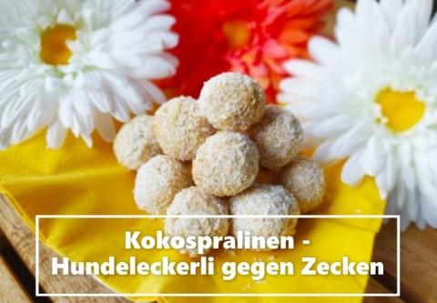 Kokospralinen – Hundeleckerli gegen Zecken