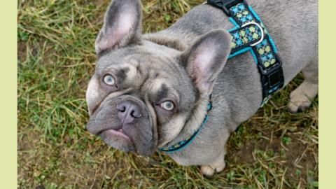 Mein Hund hat Epilepsie – was nun?