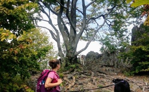 Durch die Oswaldhöhle zum Quackenschloss – Wandern mit Hund in der Fränkischen Schweiz