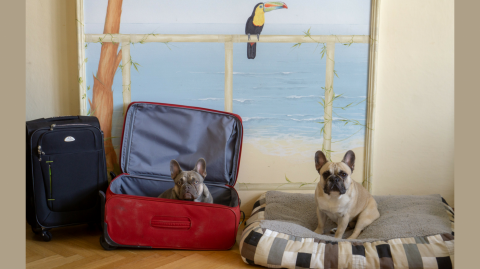 Was steht auf der Packliste für Urlaub mit Hund?