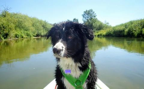 """""""Tausche Wanderstiefel gegen Wasserschuhe"""" – unsere erste Bootswanderung auf der Altmühl"""