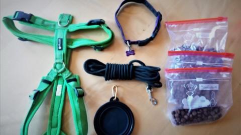 Wander-Ausrüstung für den Vierbeiner
