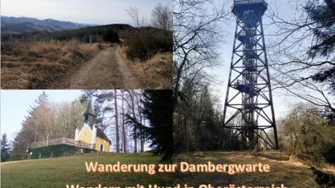 Wanderung zur Dambergwarte – Wandern mit Hund in Oberösterreich