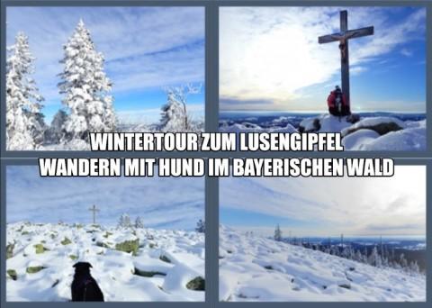 Wintertour zum Lusengipfel – Wandern mit Hund im Bayerischen Wald