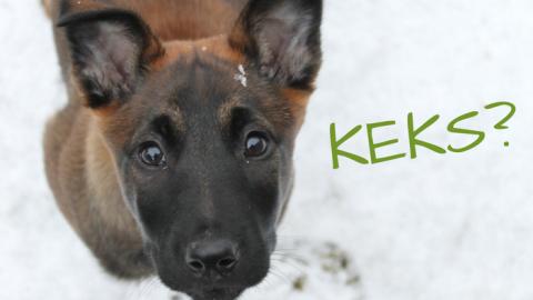 Belohnung spielt im Hundetraining