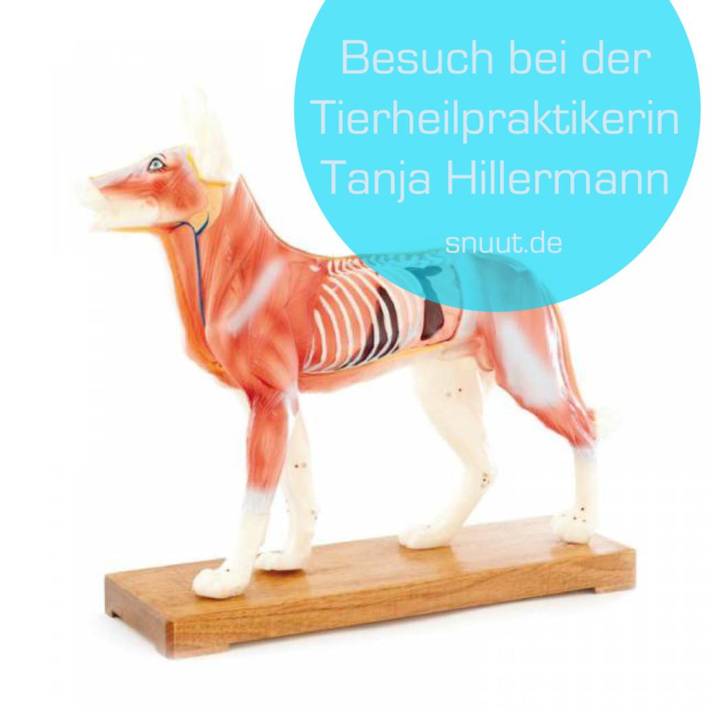 besuch-bei-der-tierheilpraktikerin-tanja-hillermann