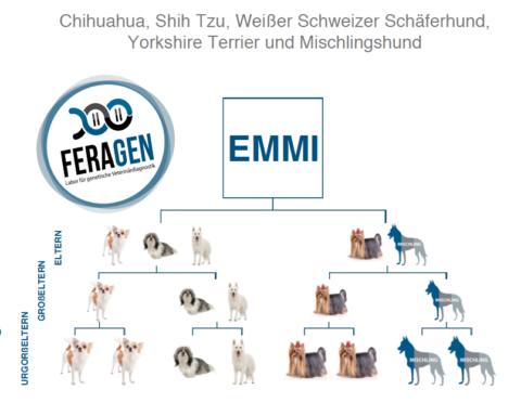 FERAGEN DNA-TEST FÜR EMMI – DAS ERGEBNIS