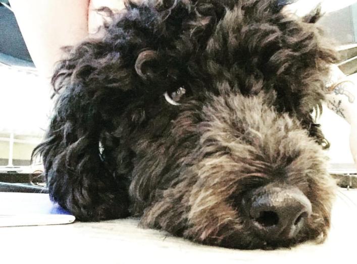 Krankenversicherung für Hunde - was muss ich wissen