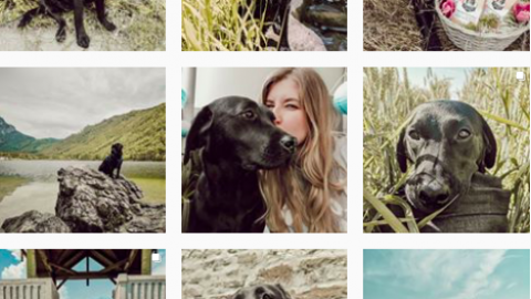 Inspiration gesucht? Diese Accounts ist die absolute Instagram Inspiration – #adventuredogs