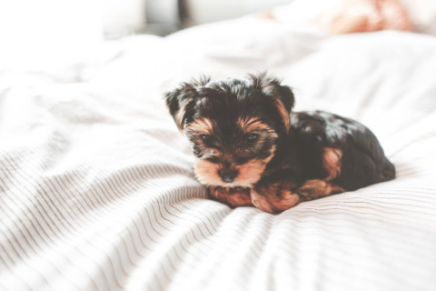 Hast du eine gute Bindung zu deinem Hund?