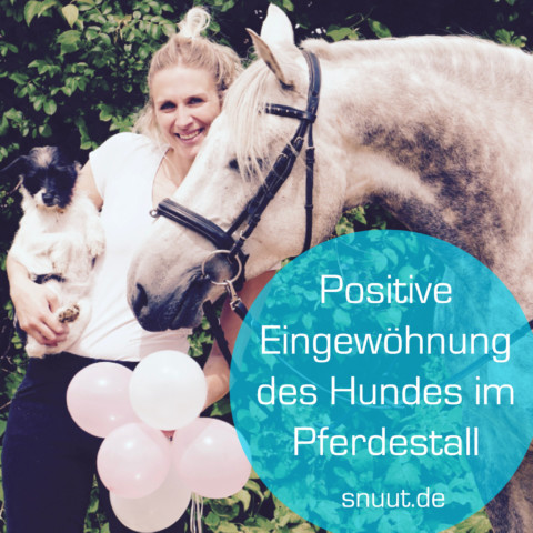 Positive Eingewöhnung des Hunde im Pferdestall
