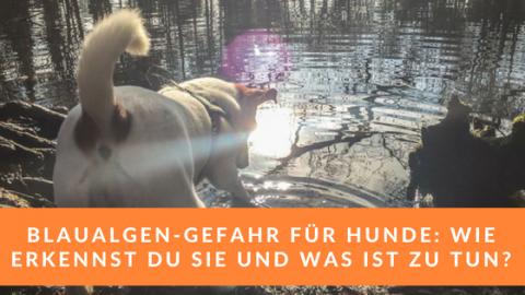 Wichtige Tipps zur Blaualgen-Gefahr für Hunde in Gewässern und Seen