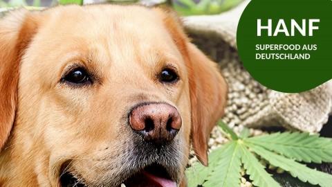 Hanf für Hunde – Top Superfood aus Deutschland