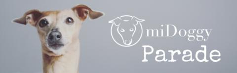 [miDoggy Parade ] Fotoshooting mit Hund – So machen wir`s.