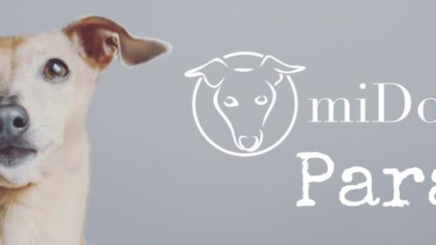 [miDoggy Parade ] Insidertipp: Wo lohnt sich 2018 der Urlaub mit Hund?