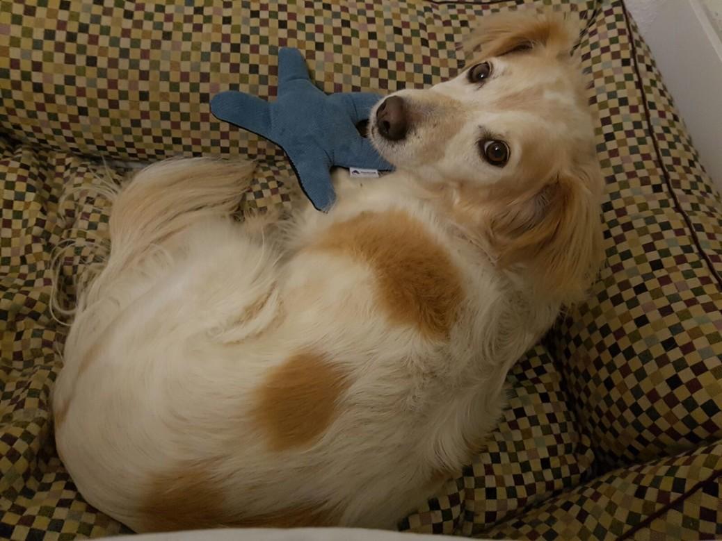 Seestern Spielzeug Hund Handmade for dogs Erfahrungen
