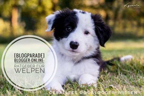 [Blogparade] Blogger-Online-Ratgeber für Welpen