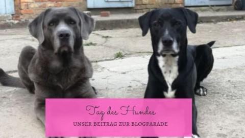 Blogparade zum Tag des Hundes