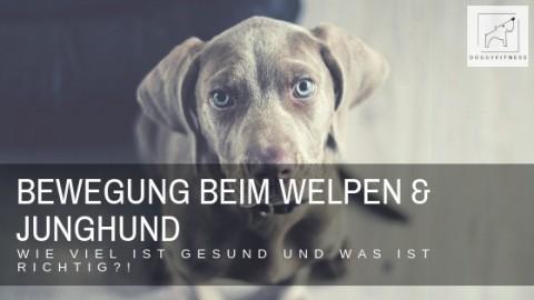 Bewegung bei Welpen und Junghunden – wie viel ist gesund und was ist richtig?