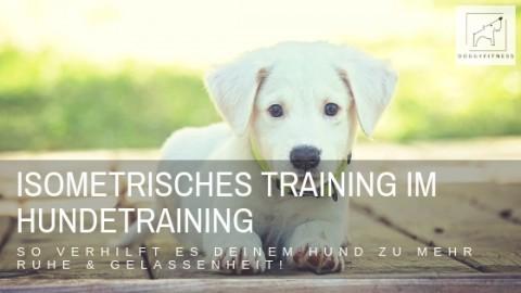 Isometrisches Training im Hundetraining bzw. im Verhaltenstraining – für mehr Ruhe und Gelassenheit!
