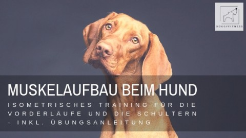 Muskelaufbau beim Hund: Isometrisches Training der Vorderläufe & Schultern