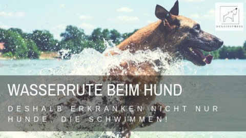 Wasserrute – deshalb erkranken nicht nur Hunde, die schwimmen!