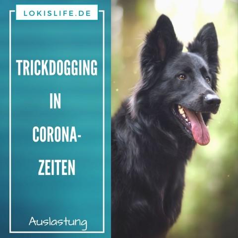 Trickdogging in Corona-Zeiten: Wie ein paar Freunde und ich unsere Hunde in der momentanen Situation mental auslasten