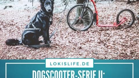 Dogscooter-Serie II: Die Ausrüstung – Diese Dinge braucht ihr für den Zughundesport