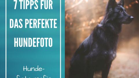 Hundefotografie: 7 Tipps mit denen du das perfekte Foto von deinem Hund machst