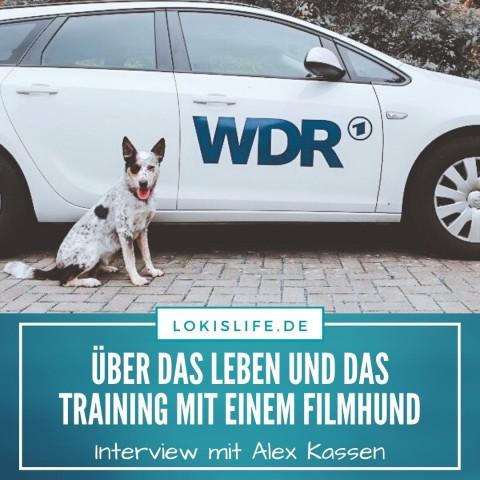 Interview: Alex Kassen über das Leben und Training mit ihrem Filmhund Julius